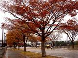 20061119-東京都江戸川区・葛西臨海公園(高)-1218-DSC02283L