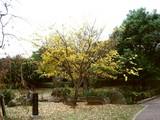 20061123-習志野市・秋津公園・秋-1531-DSC03073