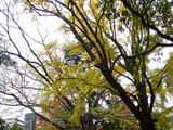 20061123-船橋市宮本5・大神宮・秋-1310-DSC02679