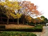 20061123-習志野市・秋津公園・秋-1340-DSC02759