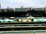 20060916-中山競馬場・雲のじゅうたん-1215-DSC00791