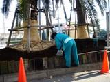 20061206-船橋市浜町2・ららぽーと・花壇・冬-DSC06551