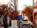 20061205-船橋市湊町・街路樹・秋-1423-DSC06501