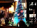 20061103-ららぽーと・巨大クリスマスツリー-1809-DSC09044.JPG