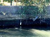 20061008-船橋市日の出1・船橋市立湊中学校-1033-DSC05427