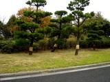 20061119-東京都江戸川区・葛西臨海公園-1147-DSC02174