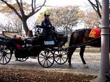 20061126-船橋市・中山競馬場・馬とのふれあい-1106-DSC04475