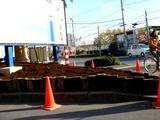 20061206-船橋市浜町2・ららぽーと・花壇・冬-DSC06553
