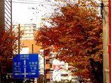 20061205-船橋市湊町・街路樹・秋-1424-DSC06503