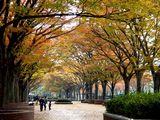 20061126-船橋市古作・中山競馬場・秋(高解像度版)-1247-DSC04772L