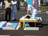 20050924-船橋市若松1・船橋競馬場・フリーマーケット-0936-DSC02773