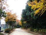 20061123-習志野市・秋津公園・秋-1339-DSC02753