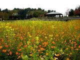 20061119-東京都江戸川区・葛西臨海公園-1209-DSC02248