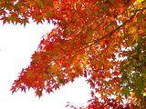 20061202-船橋市立若松中学校・紅葉-1145-DSC05795M