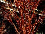 20061215-東京都千代田区丸の内・光都東京ライトピア-2105-DSC07965