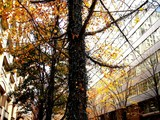 20061215-東京都千代田区丸の内・光都東京ライトピア-1248-DSC07872