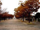 20061119-東京都江戸川区・葛西臨海公園(高)-1127-DSC02114L
