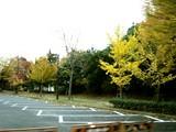 20061123-習志野市・秋津公園・秋-1529-DSC03060