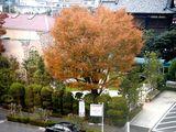 20061126-三井ガーデンホテル・プレシャス船橋-1546-DSC04953
