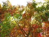20061202-船橋市立若松中学校・紅葉-1145-DSC05793M