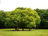 20070512-船橋市・県立行田公園・東-1241-DSC05099