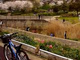 20070407-船橋市旭町6・長津川調整池公園・-1604-DSC08126T