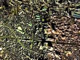 船橋市本町・都市計画3-3-7道路010