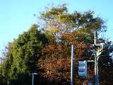 20071123-習志野市秋津・秋津公園・紅葉-1500-DSC06973
