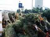 20071215-船橋市浜町2・IKEA船橋・クリスマス-1052-DSC09484