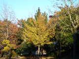 20071123-習志野市秋津・秋津公園・紅葉-1507-DSC06994