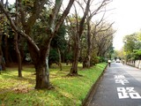 20071020-習志野市・習志野さわやかウォーク-1256-DSC09941