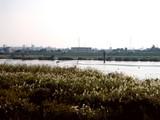 20051104-市川市・江戸川放水路-1354-DSC05164