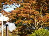 20071123-習志野市秋津・秋津公園・紅葉-1508-DSC07006