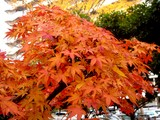 20071201-習志野市谷津3・谷津パークタウン・紅葉-1129-DSC07913