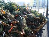 20071215-船橋市浜町2・IKEA船橋・クリスマス-1052-DSC09486
