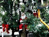 20071201-習志野市谷津遊路商店街・クリスマス-1116-DSC07840