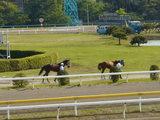 20070503-船橋市若松1・船橋競馬場-1511-DSC03231