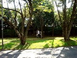 20071020-習志野市・習志野さわやかウォーク-1301-DSC09979