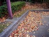 20071123-習志野市秋津・秋津公園・紅葉-1502-DSC06984