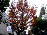 20071201-習志野市谷津遊路商店街・クリスマス-1116-DSC07837