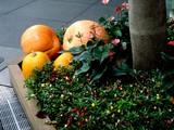 20071011-東京都・東京国際フォーラム・ハロウィン-0932-DSC07985