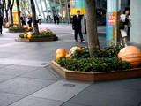 20071003-東京都・東京国際フォーラム・ハロウィン-0800-DSC07982