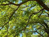 20071021-船橋市宮本5・船橋大神宮・奉納相撲大会-1040-DSC00290
