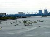 20070901-市川市・江戸川放水路・ハゼ釣り-1233-DSC01345
