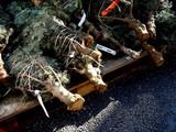 20071215-船橋市浜町2・IKEA船橋・クリスマス-1052-DSC09487