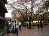 20071103-習志野市泉町・日本大学・学園祭・桜泉祭-1123-DSC02521