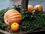 20071011-東京都・東京国際フォーラム・ハロウィン-0932-DSC07991
