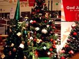 20071116-IKEA船橋・クリスマス・生ツリー・モミの木-1932-DSC04764