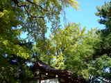 20071028-船橋市宮本5・船橋大神宮・奉納相撲大会-1003-DSC01576