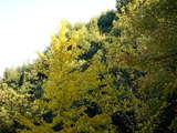 20071123-習志野市秋津・秋津公園・紅葉-1507-DSC06998